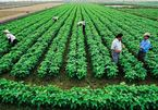 Công nhận quyền sử dụng đất đối với đất nông nghiệp