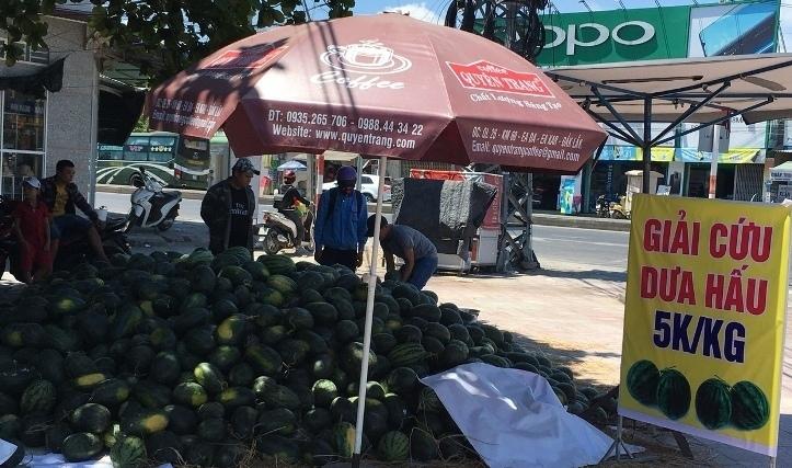 Dưa hấu 2.900 đồng/kg, dân Nha Trang chen nhau 'giải cứu'