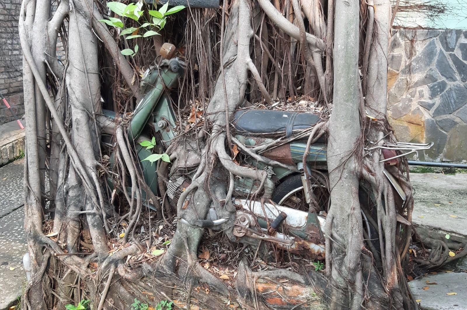 Đu đủ 'mang bầu', bò 6 chân, rủ nhau đi xem hiếm lạ Việt Nam