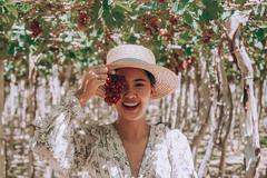 Khám phá vườn nho xanh mát, trĩu quả ở Ninh Thuận