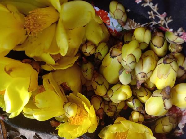 Loại trà được người giàu Việt săn lùng, có nơi bán giá 30 triệu đồng/kg