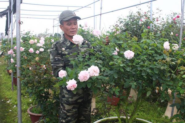 Vườn hoa hồng ngoại khủng 2 vạn cây của U60 ở làng hoa Xuân Quan