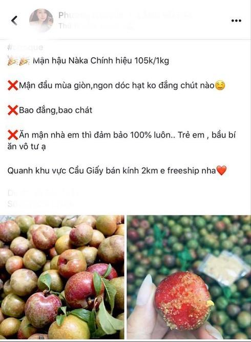 Mận đầu mùa giá 'chát', tiểu thương Hà Nội 'hét' giá 200 nghìn đồng/kg