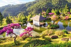 Nhiều loài hoa dại thành bon sai trăm triệu ở Đà Lạt