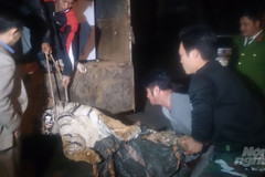 How illegal traders bring tigers into Vietnam