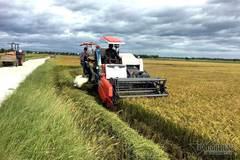 Cập nhật từ 2 Bộ, yên tâm an ninh lương thực, dư cung xuất khẩu gạo