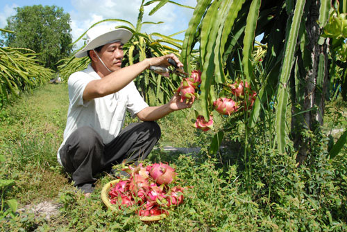 VN farm exports head for Chinese market again