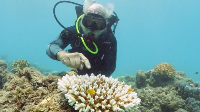 Great Barrier Reef suffers third mass bleaching in five years