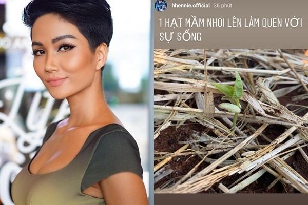 Sao Việt khoe ảnh nấu nướng, tập gym, trồng rau giữa mùa Covid-19