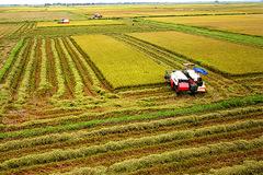 Đồng loạt báo tin được mùa, dư xuất khẩu 6 triệu tấn gạo