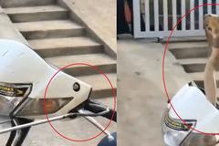 Rắn hổ mang cực độc nấp trong đầu xe máy