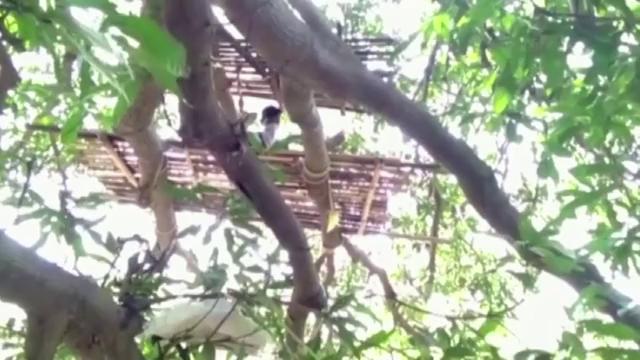 Thiếu chỗ tự cách ly, dân làng Ấn Độ dựng lán ngủ trên cây