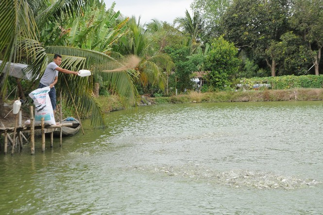 Catfish farming in danger, farmers leave ponds idle