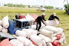 Tổng cục trưởng Hải quan: Phải mua đủ gạo dự trữ mới cho xuất khẩu