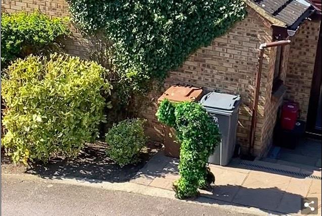 Trốn cách ly Covid-19, người đàn ông Anh hóa trang thành bụi cây xanh mướt