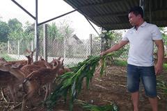 Kỹ sư bỏ lương cao về nuôi con đặc sản cưa sừng làm thuốc bổ