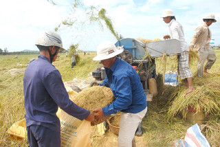 Mekong Delta faces rice crisis as exports are interrupted
