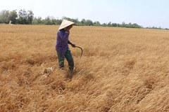 Bộ TN&MT đề xuất hỗ trợ cho 5 tỉnh hạn mặn nặng 4 tỷ đồng