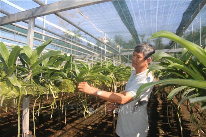 Vùng đất dân trồng hoa lan thu hàng tỷ đồng/năm