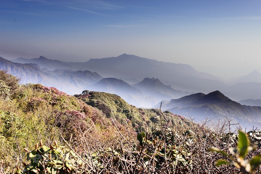 Flowers bloom on Hoang Lien Son mountain range