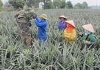 Room for Vietnamese farm produce exports to Singapore amid COVID-19