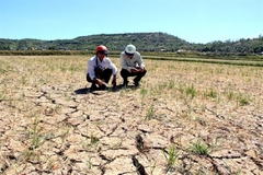 Central Vietnam faces water shortage for summer-autumn crop
