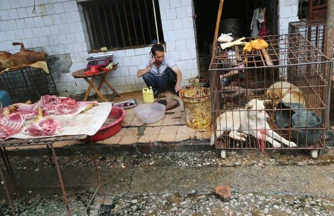 Thành phố đầu tiên tại Trung Quốc cấm ăn thịt chó, mèo