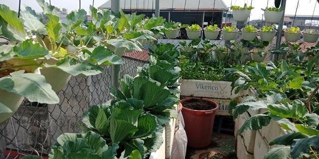 Mãn nhãn 'khu vườn trên mây' tốt như nông trại của ông bố đảm Hà Nội