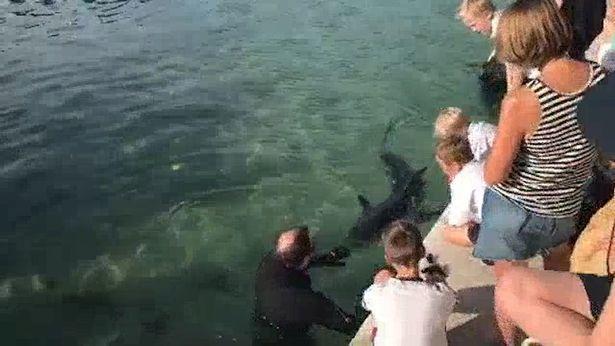Bất chấp lệnh cách ly, người Australia vẫn đổ xô đến bãi biển xem cá mập