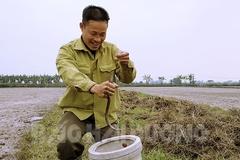 Lươn đồng khan hiếm, giá 300 ngàn/kg, 1 ngày đi câu có triệu bạc