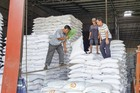Chưa mở xuất khẩu, giá gạo cấp thấp tăng đột biến