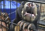 Coronavirus: Putting the spotlight on the global wildlife trade
