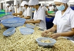 Cashew export tipped to recover strongly after pandemic