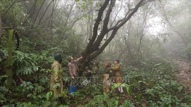 VN diversifies investments in special-use forests