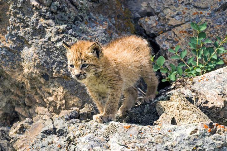 Bạn có biết hết được tên các 'bé' động vật này?