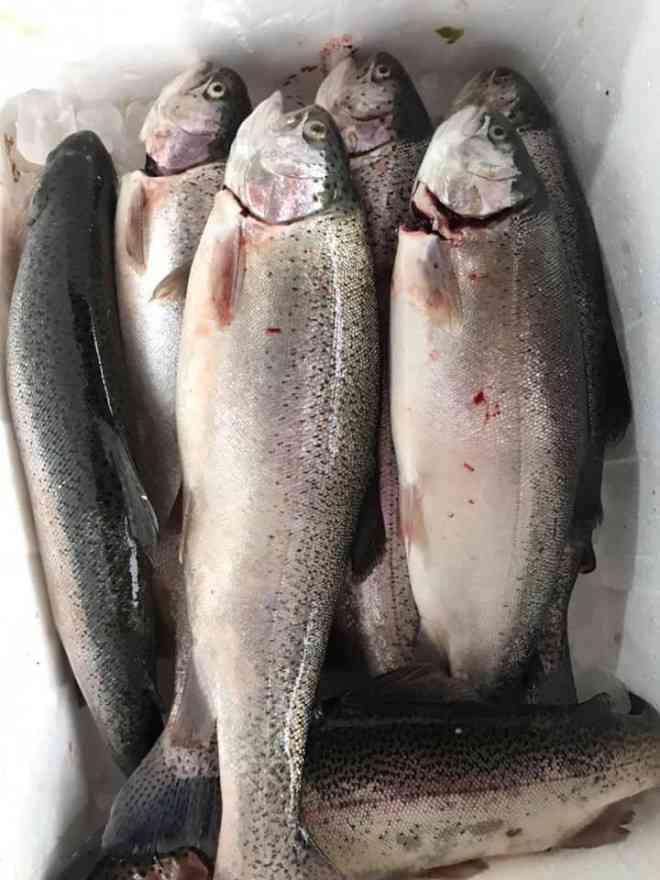 Cá hồi Sa Pa còn tồn hơn 200 tấn, giá chỉ hơn 150.000 đồng/kg