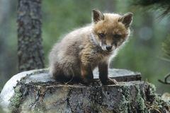 Đáp án tên 10 loài động vật