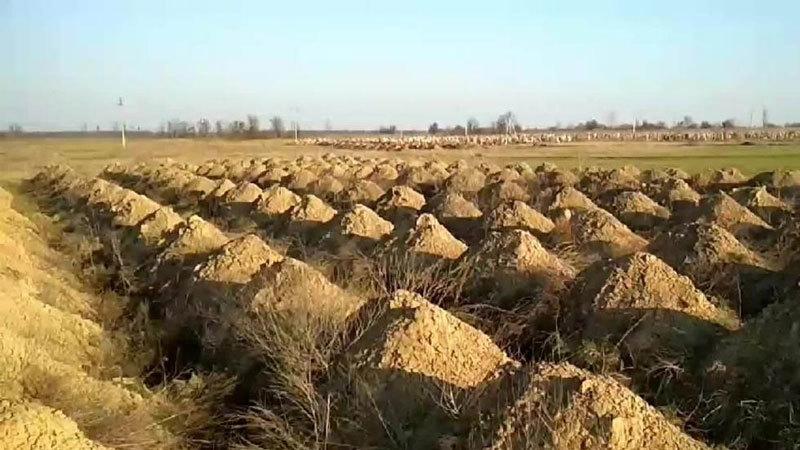 Thành phố ở Ukraina đào sẵn hàng trăm mộ để cảnh báo dân về Covid-19