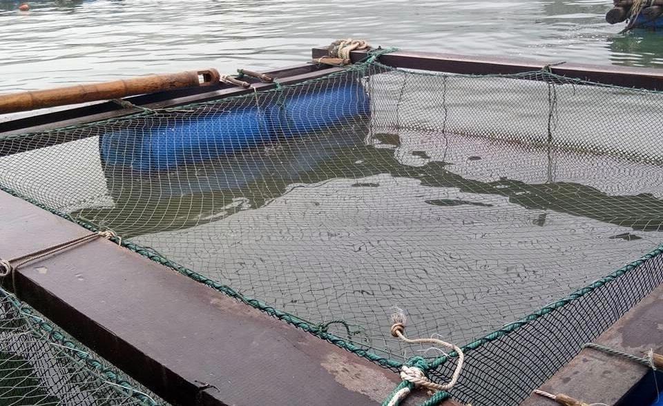 Liềunuôi cá lồng, nông dân Liệp Tè lãi đậm, thoát nghèo