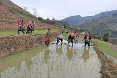 Phụ nữ Hưng Thịnh cải thiện thu nhập nhờ trồng cây ăn quả có múi