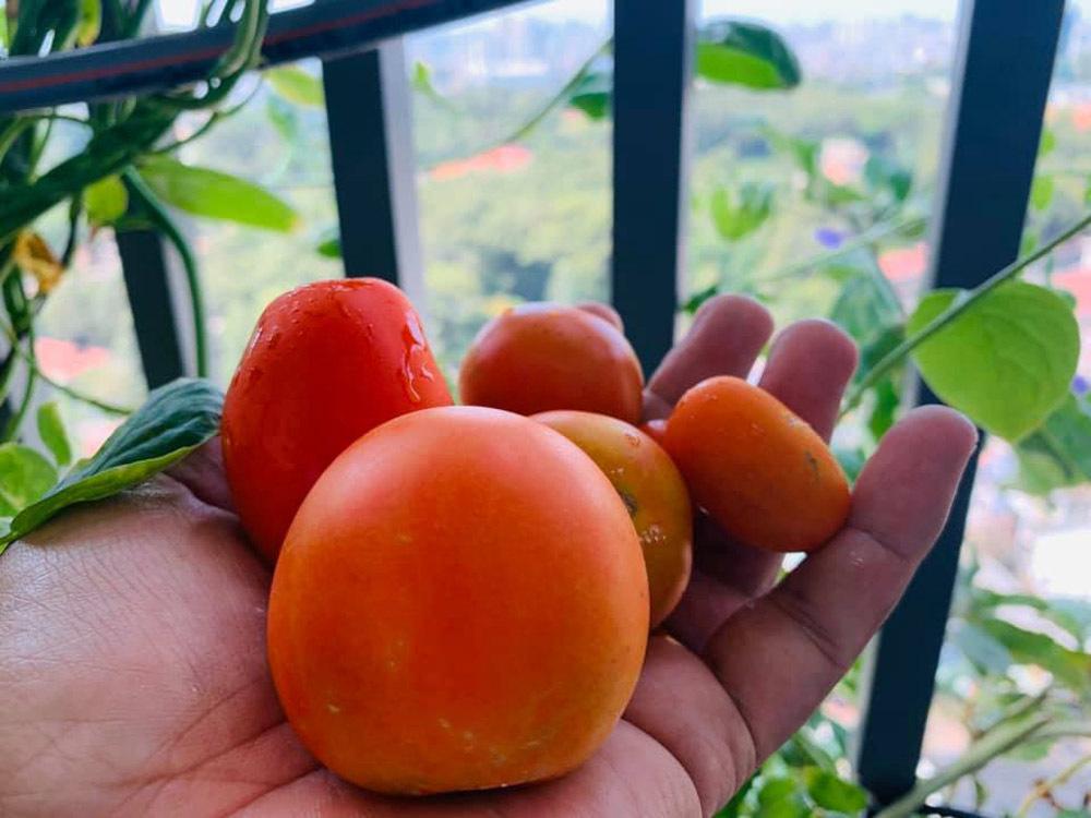 Giám đốc trồng rau, 'lăn vào bếp' những ngày giãn cách xã hội