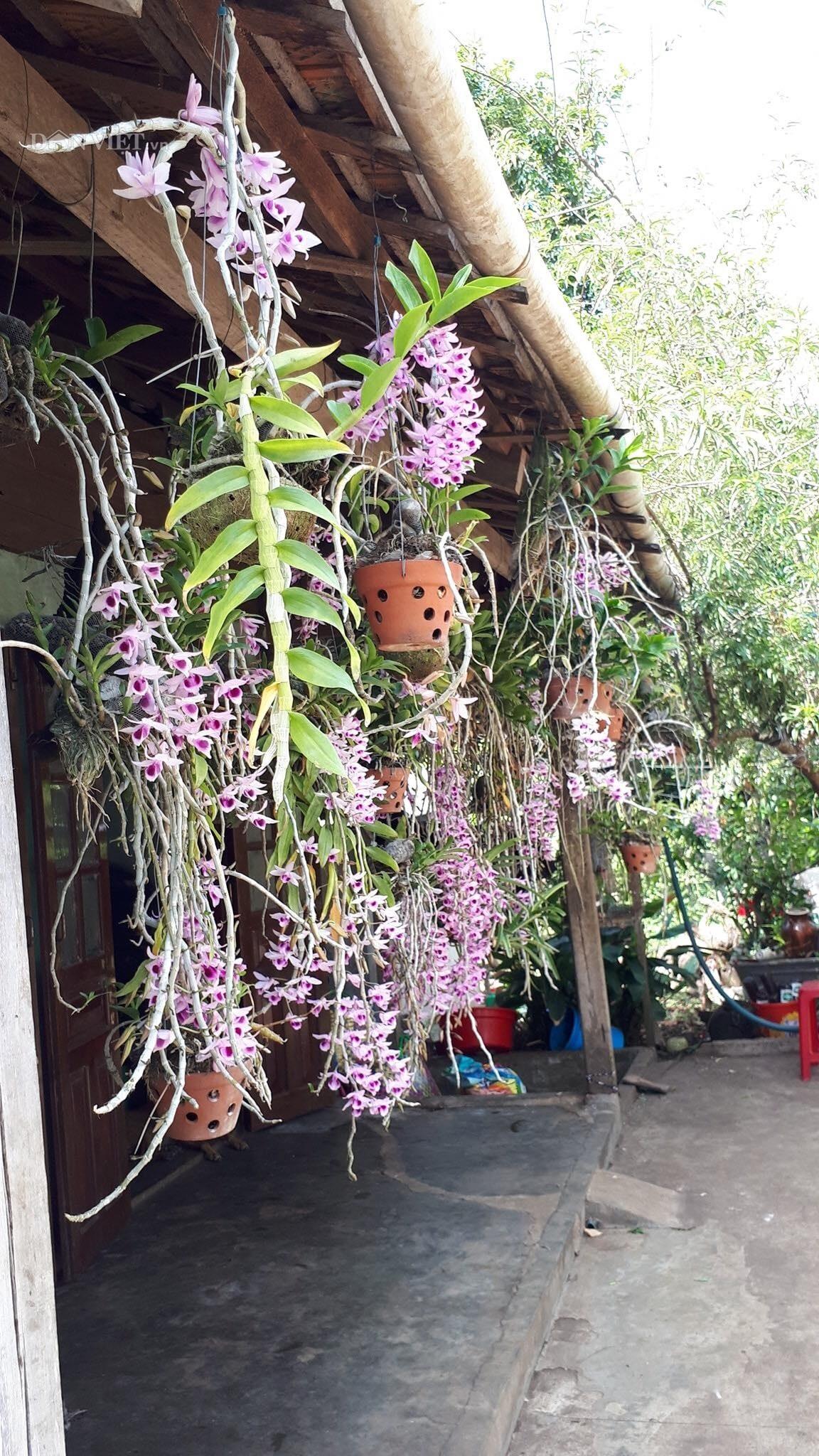 Thềm nhà treo toàn hoa lan rừng quý hiếm của trai 9X tỉnh Đắk Nông