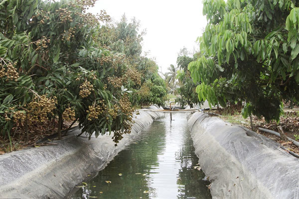 Soc Trang islet farmers beat saltwater intrusion, drought by storing water