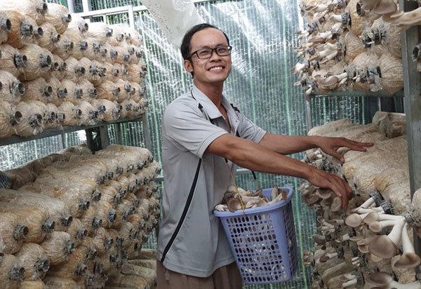 Organic mushroom grower finding stable customers