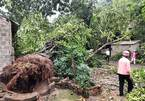 Hail and thunderstorms destroy crops, houses in northern Vietnam