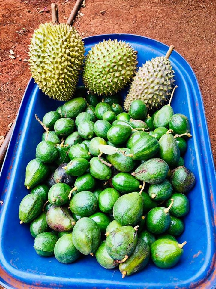 Rời Sài Gòn, Lý Nhã Kỳ về vườn làm nông dân rao bán trái cây