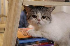 Feline cafe is winning the hearts of Hanoians