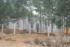 Kết luận vụ giám đốc khách sạn cải tạo, xây nhà trên đất lâm nghiệp