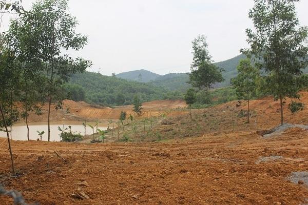 Giám đốc khách sạn xây khu sinh thái trái phép trên đất lâm nghiệp?