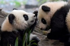 Coronavirus: German zoo may have to feed animals to each other